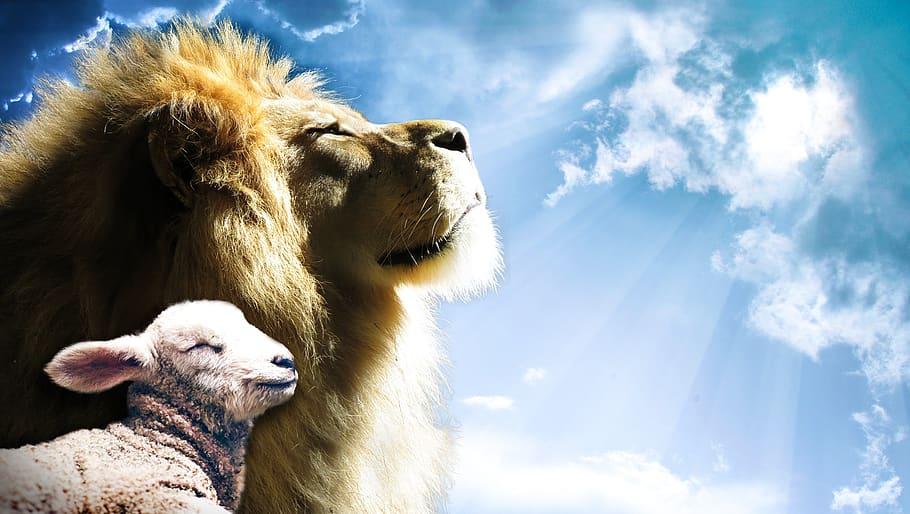 lion-lamb-sky-jesus